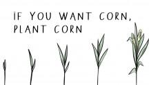 corn-webb